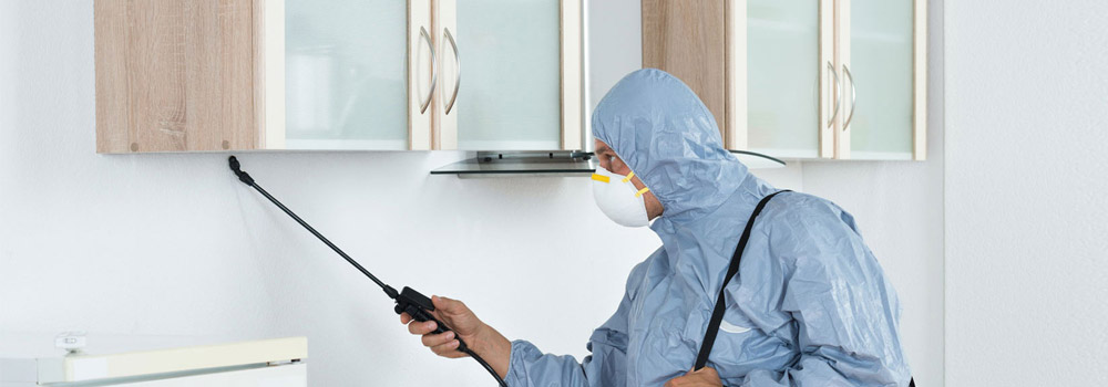 Leading Pest Control Services in Brisbane
